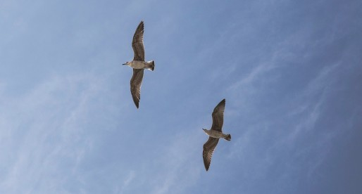 Application Mapping with Windows 10 Migration – Two Birds with One Stone