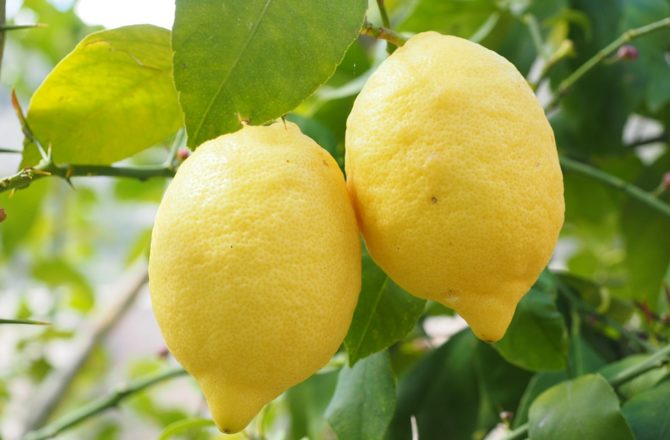 Is Your ITSM Solution a Lemon?